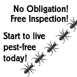 No Obligation FREE inspection from DellPest